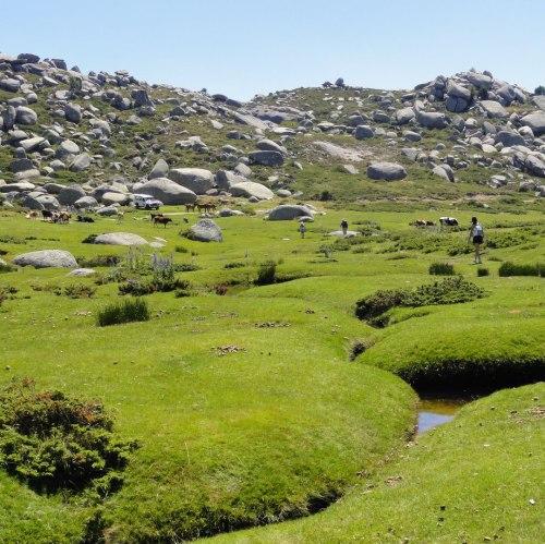 Idée de randos - Plateau du Cuscionu